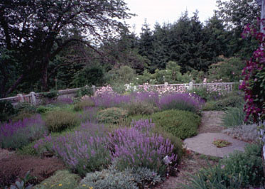 Heather Garden, 2002 Patrick Chassé