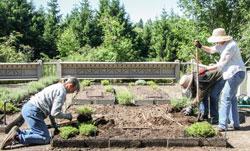 Replanting beds Caroline Felkel